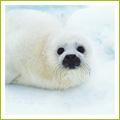 地球温暖化による動物への影響とは?   地球温暖化まるわかり